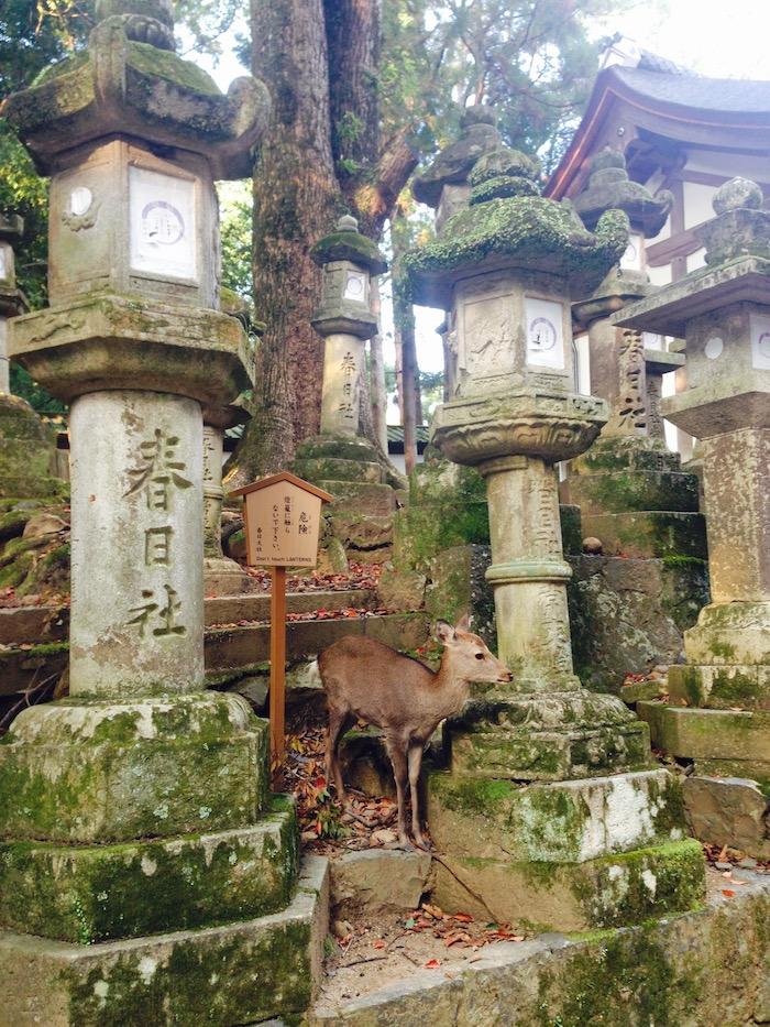 Dicas doa Japão - Nara2